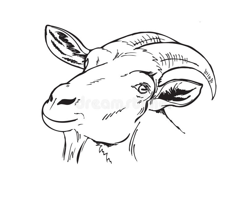 山羊的黑白头 向量例证