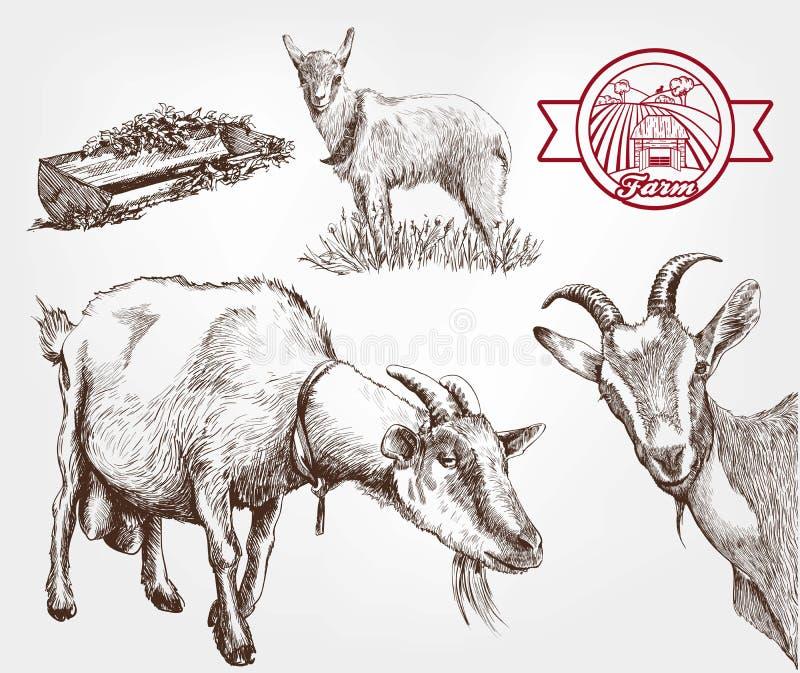 山羊饲养 皇族释放例证