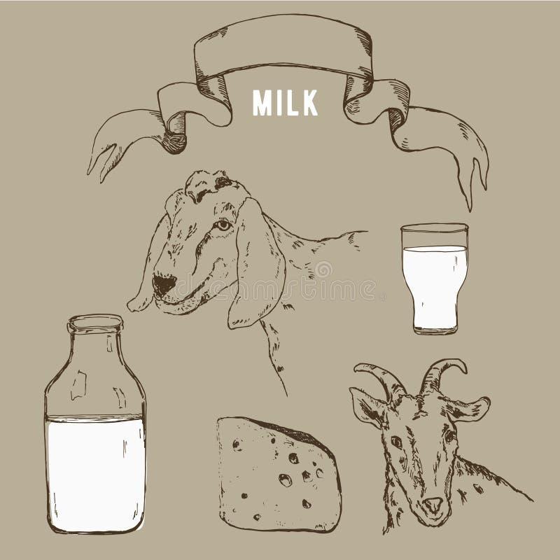 山羊,山羊牛奶瓶和葡萄酒横幅的传染媒介图象 一套仿照板刻样式的农业例证 库存例证