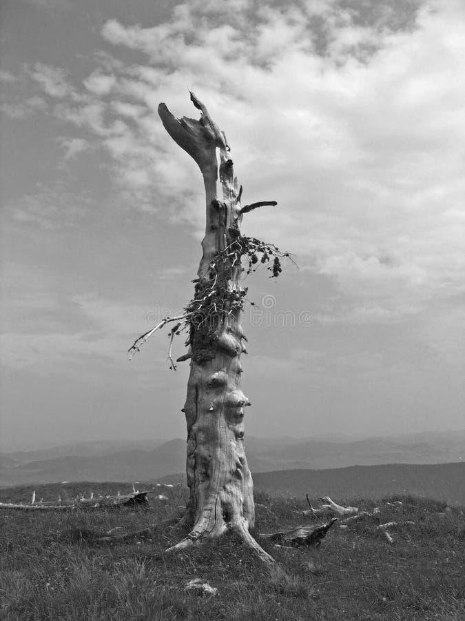 山老顶部结构树 库存图片