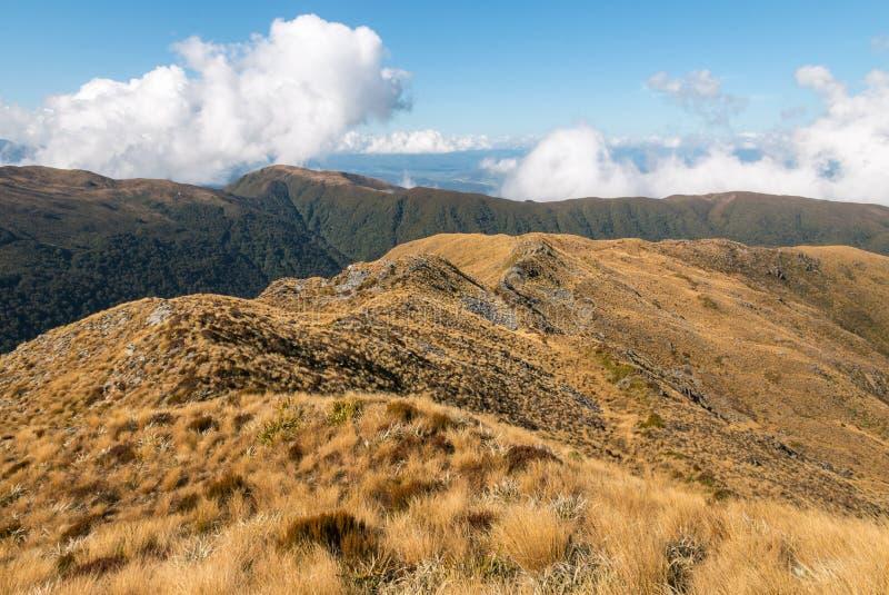 山脉在帕帕罗瓦国家公园,西部,海岸,南岛,新西兰 库存图片