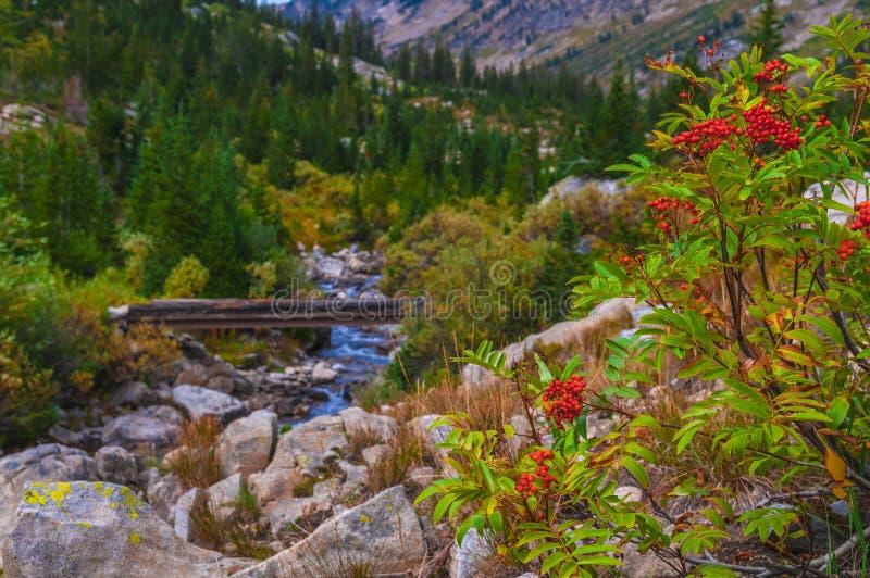 山脉灰和脚桥梁在供徒步旅行的小道在小瀑布 库存照片