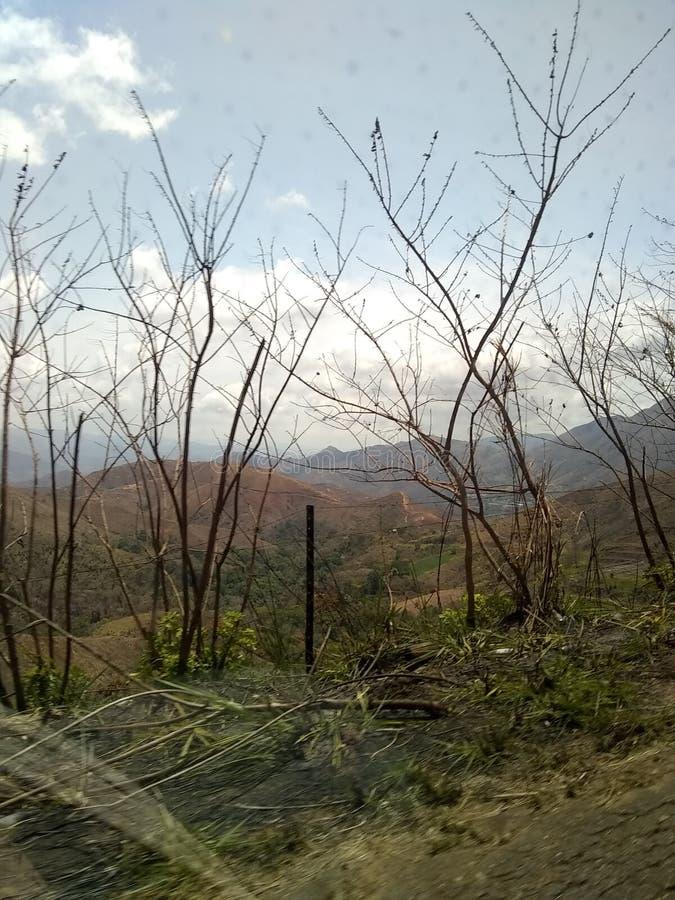 山自然植被委内瑞拉马拉凯 库存图片