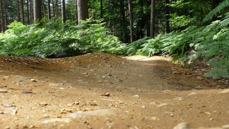 山自行车赛车道在森林 免版税库存照片