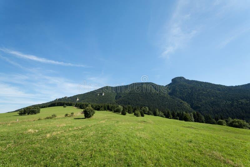 山草甸和牧场地在斯洛伐克 免版税库存图片