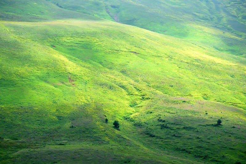 山草甸风景看法  库存图片