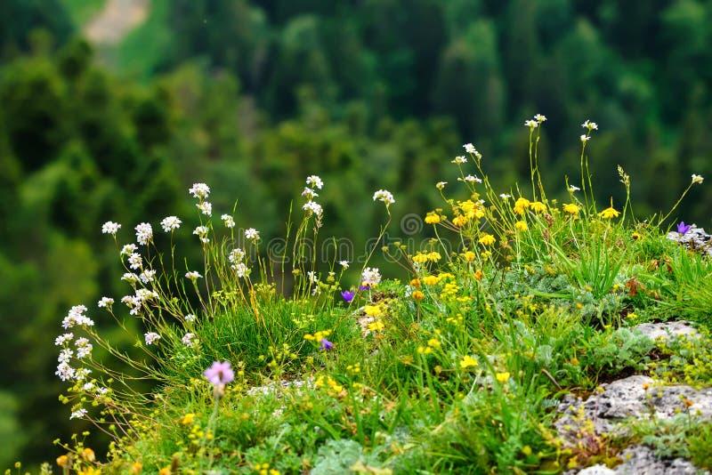 山草甸风景看法  库存照片
