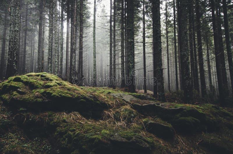 山行迹低谷杉树森林 免版税库存照片
