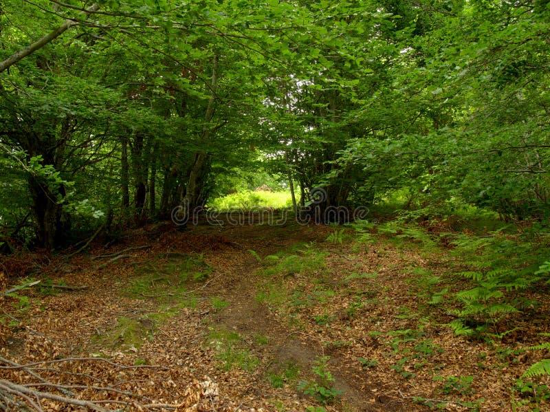 山行迹通过森林 库存照片