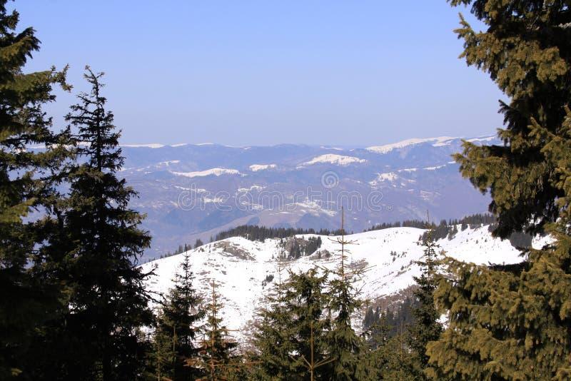 山被看见在杉树之间在冬天 免版税库存照片