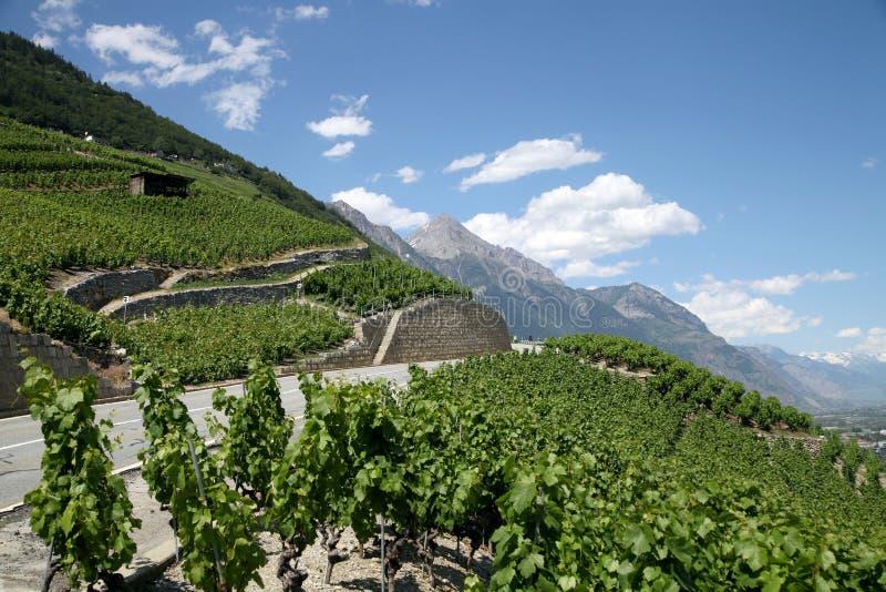 山路和vinegroves在倾斜 库存照片