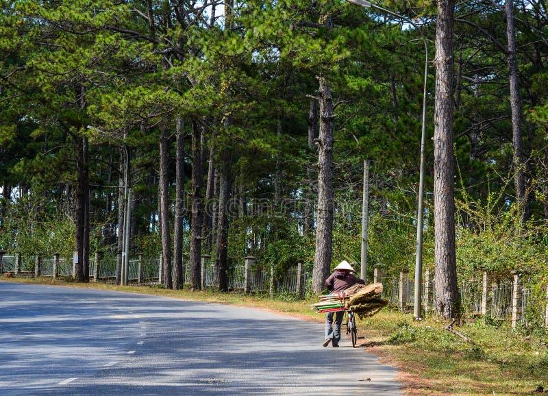 山路在大叻,越南 库存图片