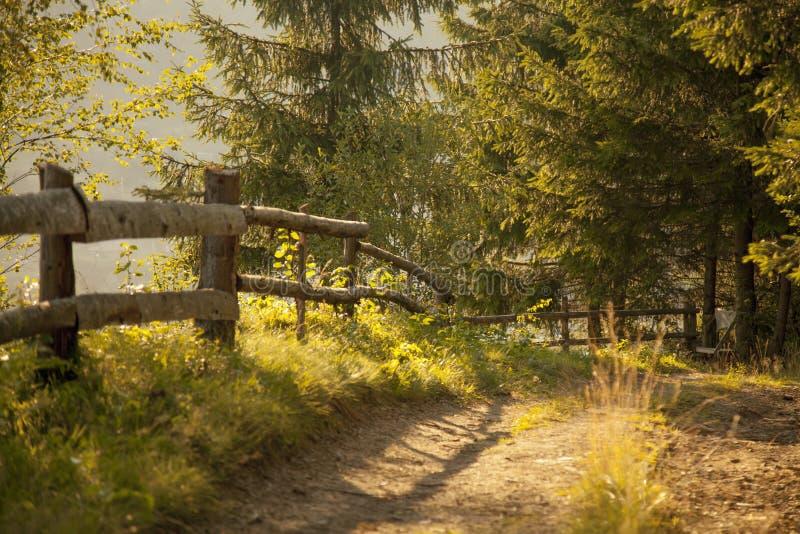山路美丽如画的看法在阳光下的焕发 剧烈的晚上场面 库存图片