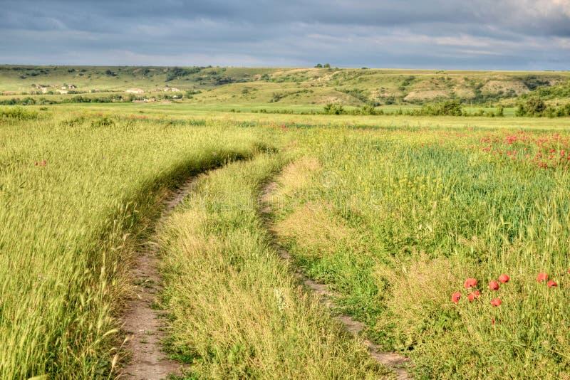 山路,夏天风景,绿色领域 免版税库存照片