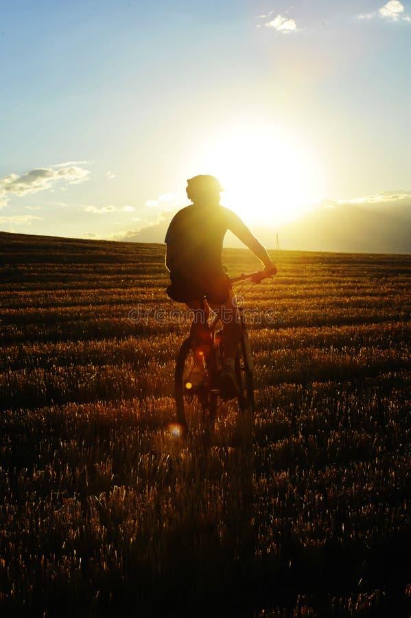 登山车车手骑马通过反对灼烧的夏天太阳的美好的秸杆领域在日落 图库摄影