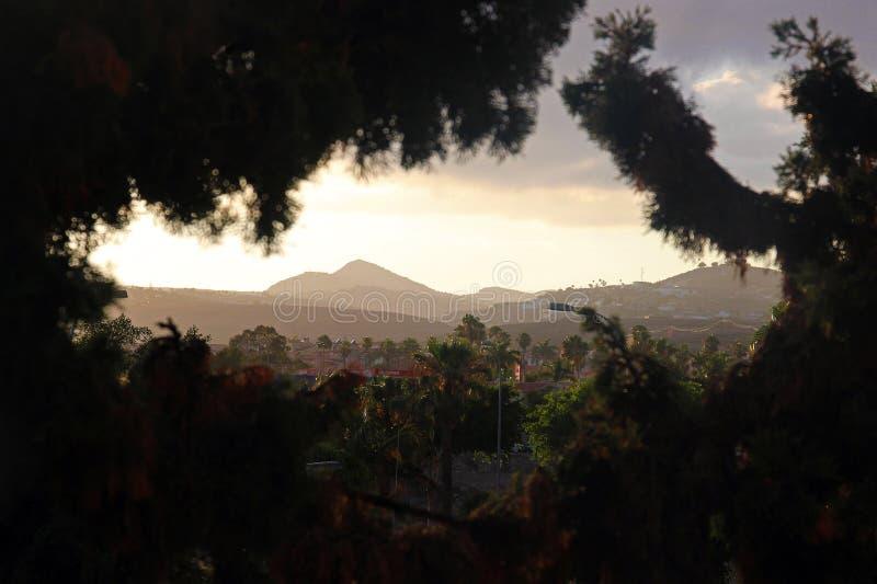 山通过树在大加那利岛 库存图片