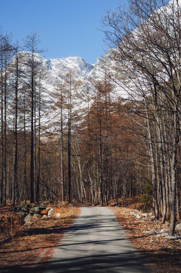 山道路低谷罗莎峰山麓,意大利 库存照片