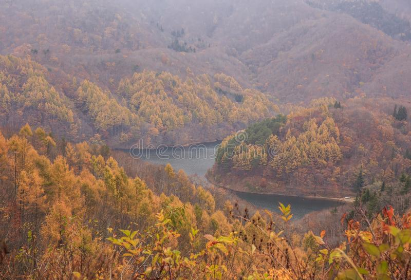 山风景与黄色松树的在磐梯阿祖马Lakeline -亚马,福岛,日本的秋天 库存图片