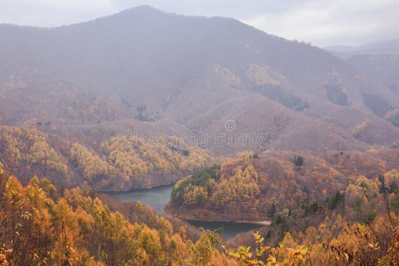 山风景与黄色松树的在磐梯阿祖马Lakeline -亚马,福岛,日本的秋天 库存照片