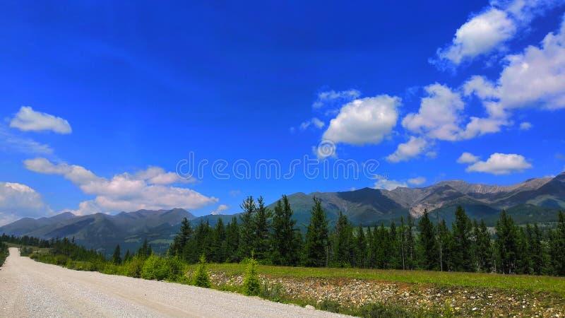 山风景在山的一个夏日给了一个晴天外绿色森林反对天空蔚蓝 免版税图库摄影