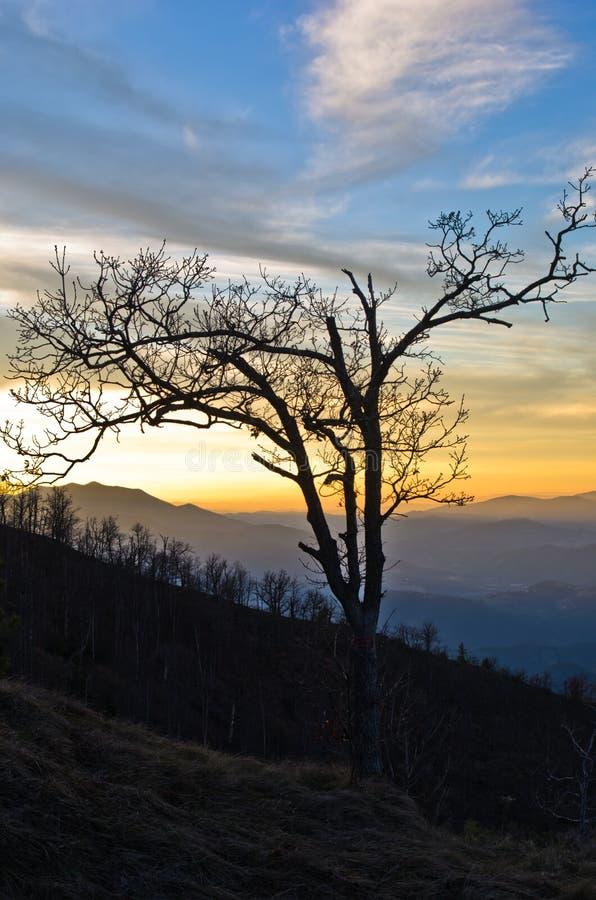 山风景在日落的早期的春天,登上Stolovi 免版税库存照片