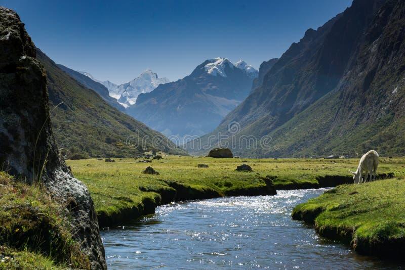 山风景在秘鲁的安地斯有喝从山小河的一个白马的 免版税库存照片