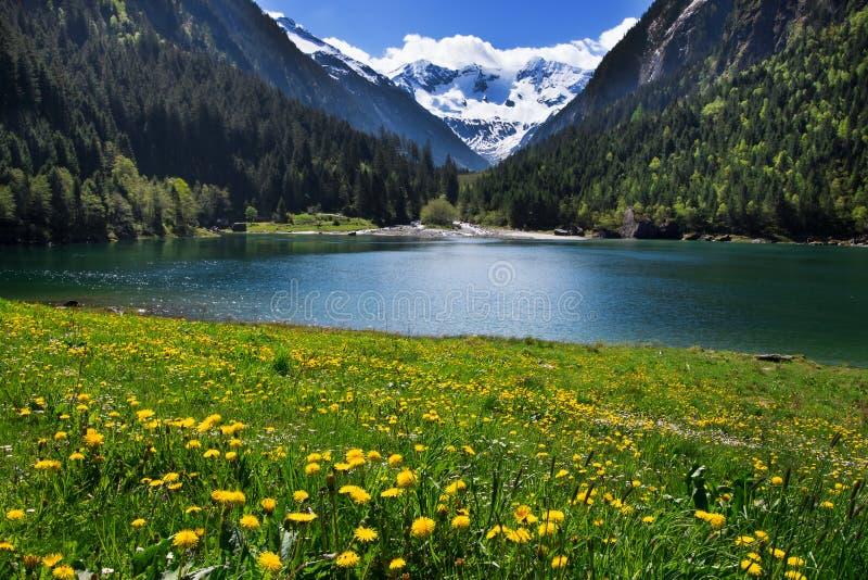 山风景有草甸的明白湖在前景开花 库存照片