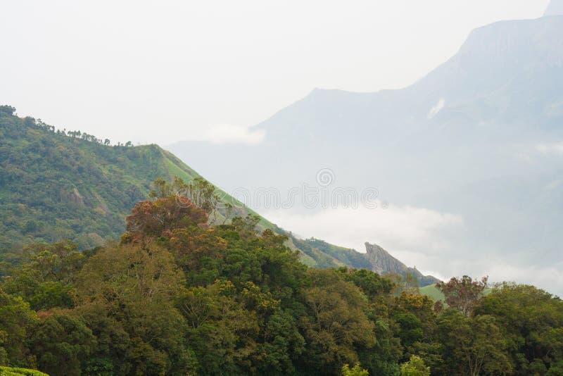 山风景munnar印度 免版税库存图片