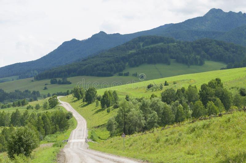 山风景taiga和路去距离 图库摄影