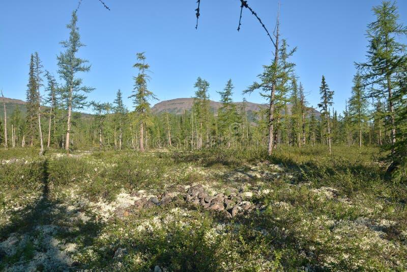 山麓小丘森林寒带草原 库存照片