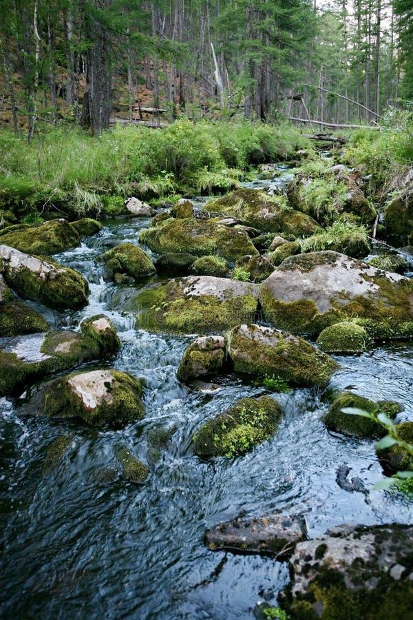 山麓小丘的快速的山河在taiga的背景 树木繁茂多山区域 萨哈林岛 库存照片