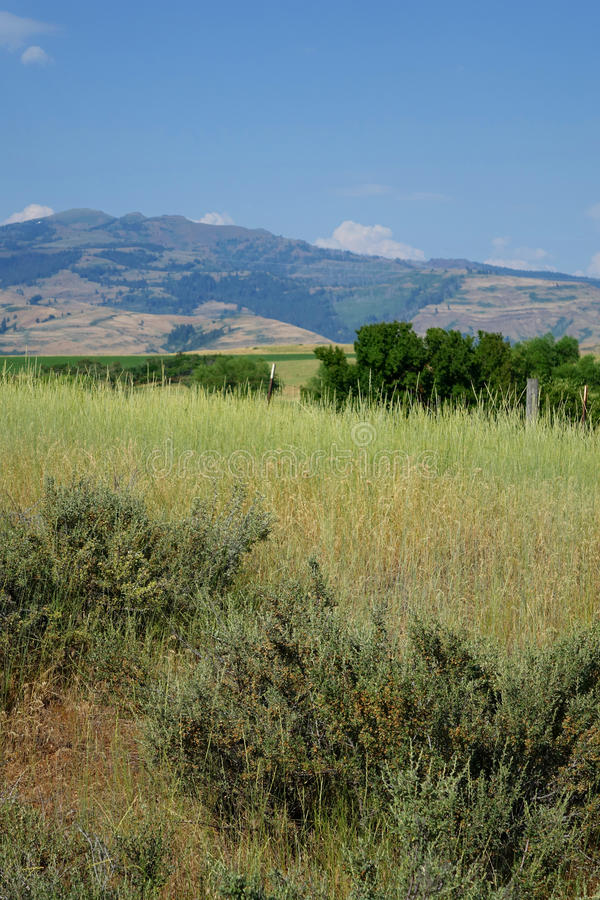 山临近Mesa,爱达荷 免版税库存图片