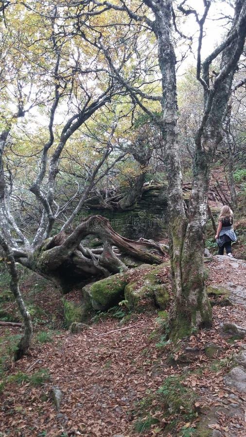 崎岖的树 库存照片