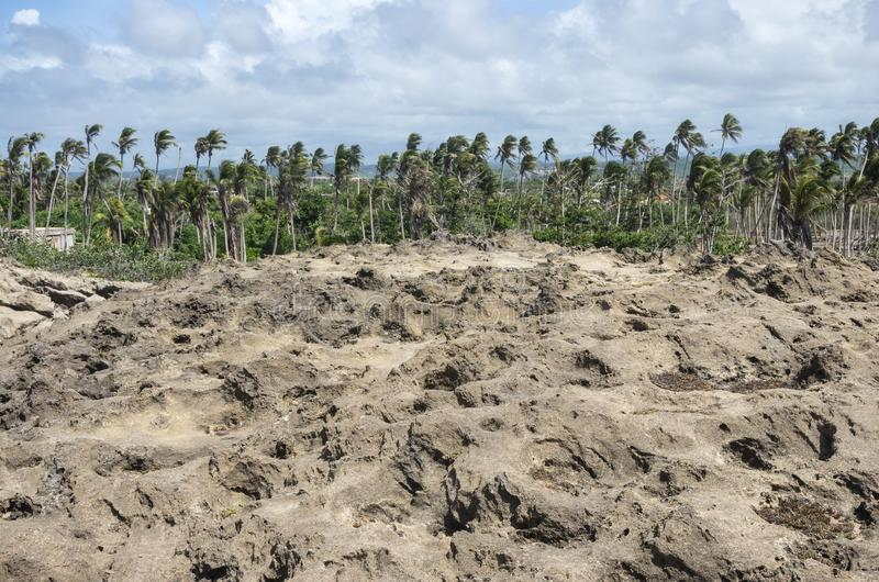 岩层和沿海森林地在阿雷西博附近 免版税图库摄影