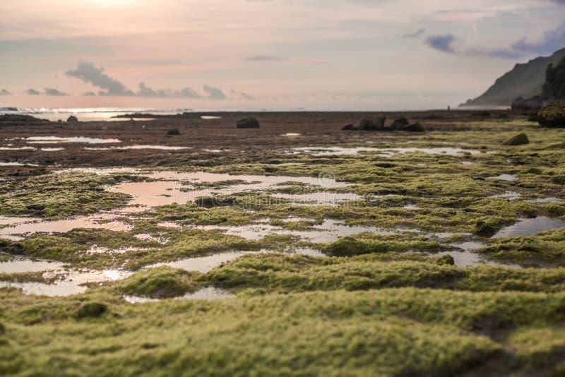 岩层处于低潮中在海洋 库存图片