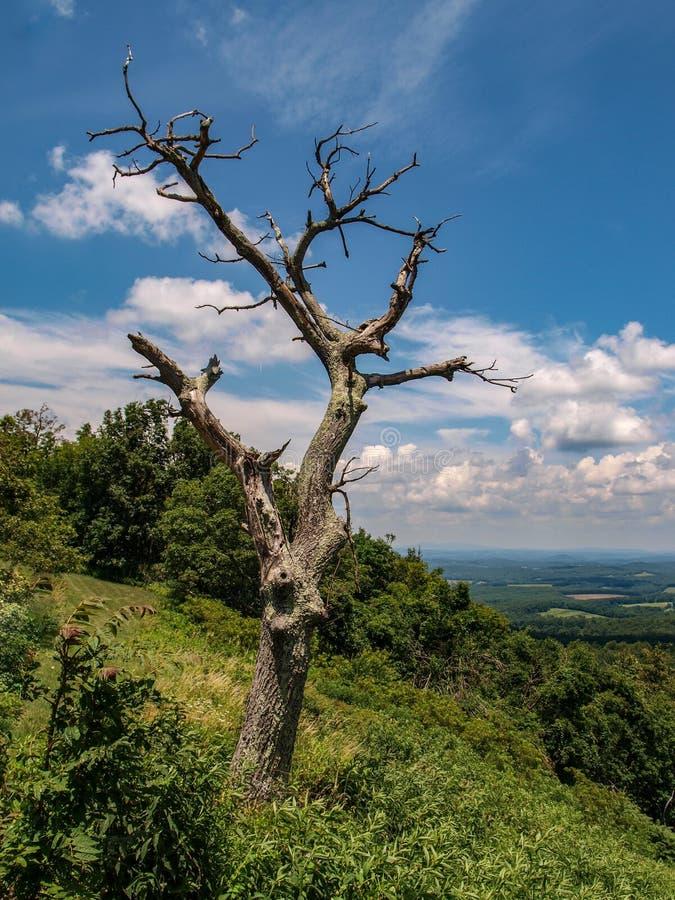 岩石从蓝岭山行车通道的城堡峡谷 免版税库存照片