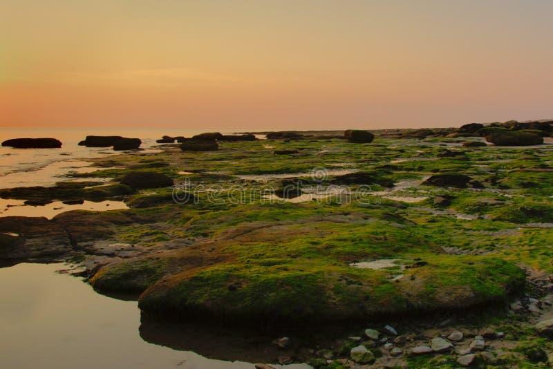 岩石以北海绿色在五颜六色的晚上光seeaweed 免版税库存图片