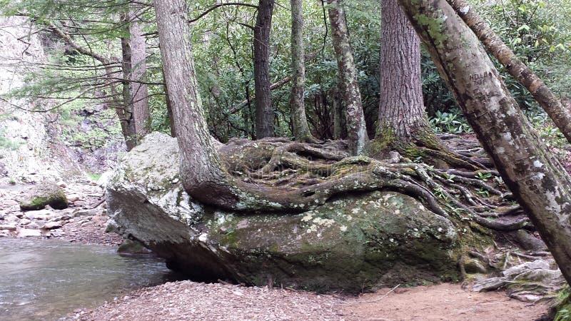 岩石和根 免版税库存照片