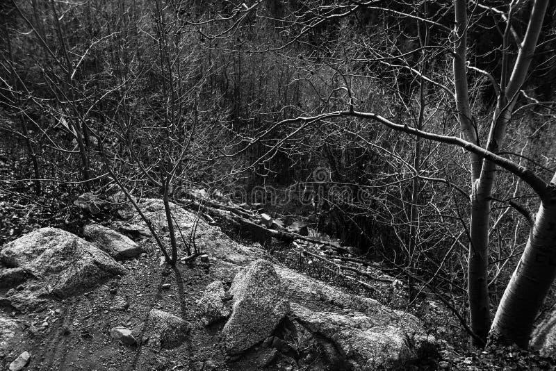 岩石和草丛 库存照片