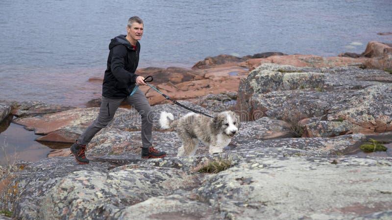 岩石岸的活跃狗步行者 免版税库存照片
