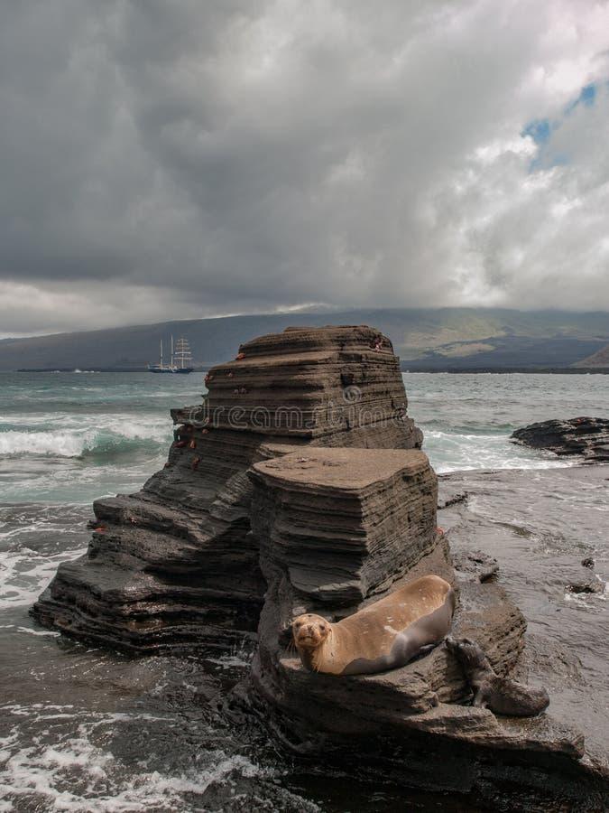 岩石平台和海狮 库存照片