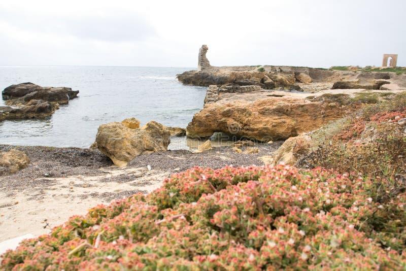 岩石海岸和海在马赫迪耶附近,突尼斯镇  免版税库存图片