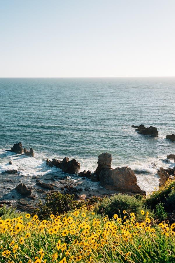 岩石海岸花和看法在科罗娜del Mar,新港海滨,加利福尼亚 库存图片