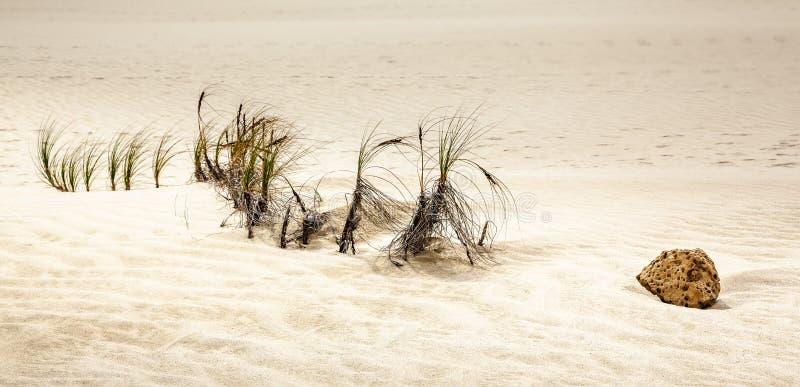 岩石片断在沙丘, Te Paki储备的 免版税库存照片
