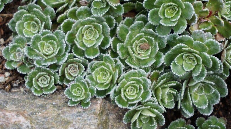 岩石的植物春天 图库摄影