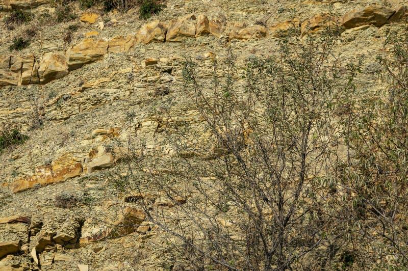 岩石的自然石头和片段与优美的植物的在黑海附近的山坡的作为原始和质地b 图库摄影