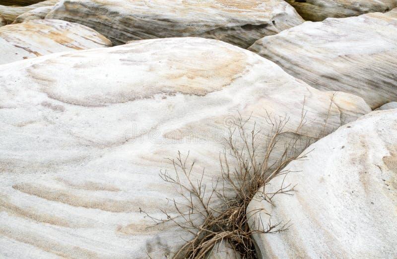 岩石纹理与植物的摘要背景 免版税库存照片