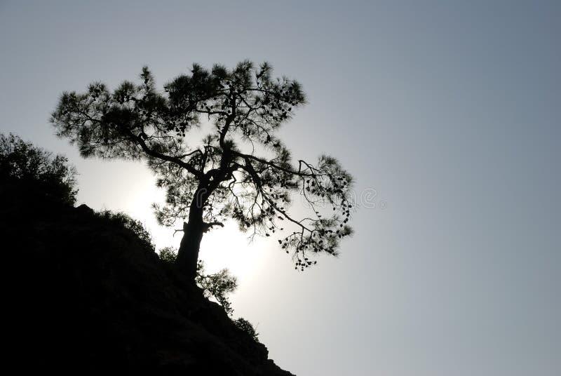 岩石结构树 图库摄影