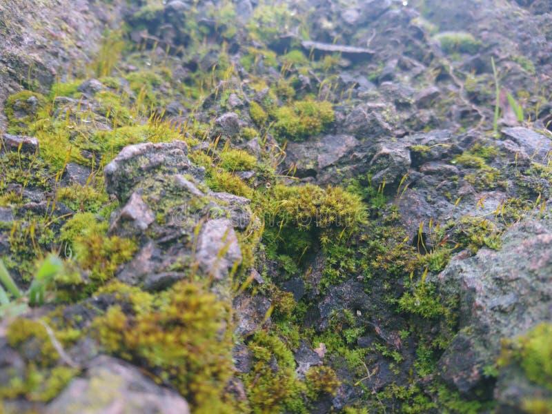 岩石结构 库存图片