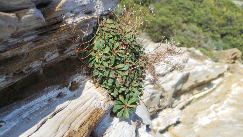 岩石背景的一棵小植物 库存照片